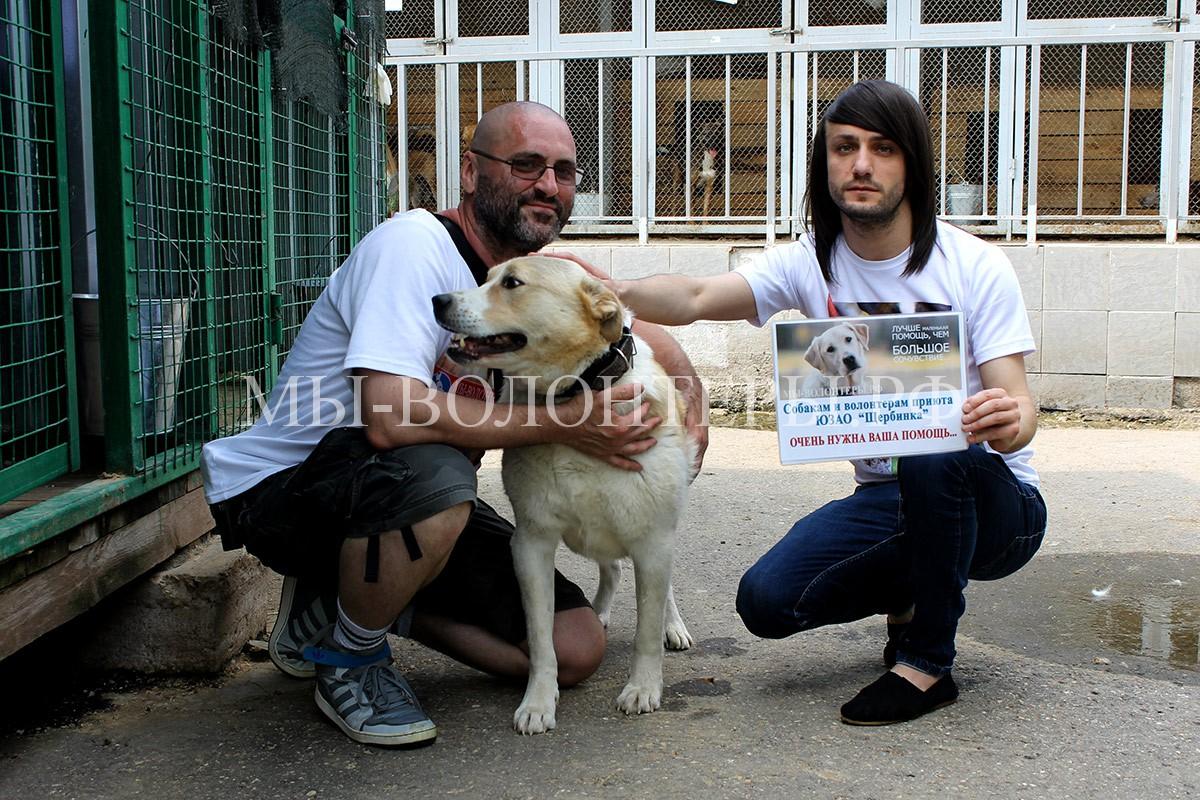 леван-чудо-собака-афина-игорь