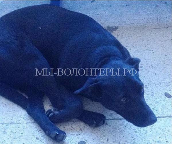 Собака со стертыми в кровь лапами ждала в аэропорту