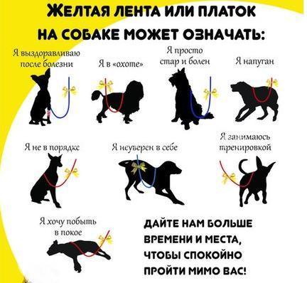 Инициатива любителей собак: вешать на поводки нервных собак желтые ленты или «Пожалуйста, не подходите к моей собаке»