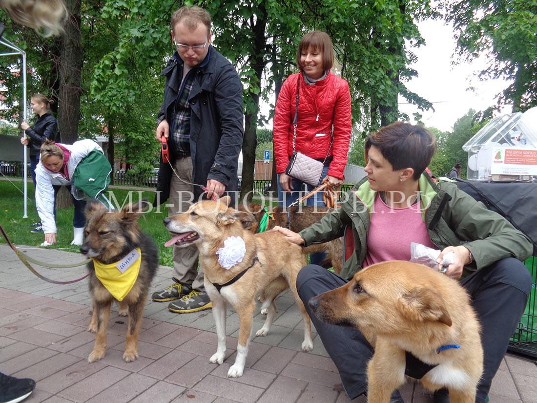 собаки-приюта-кожухово-общаются