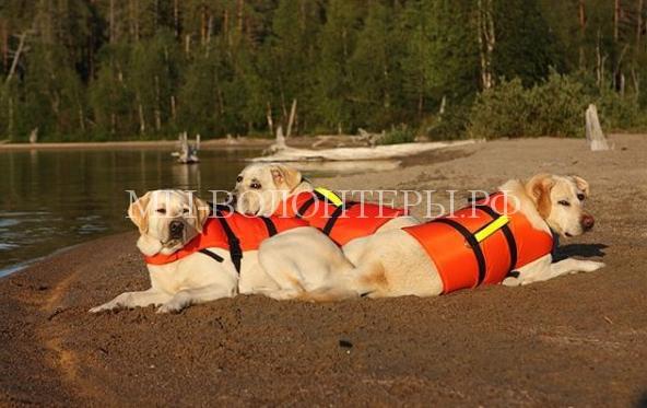 Собаки-спасатели будут нести службу в московских зонах отдыха