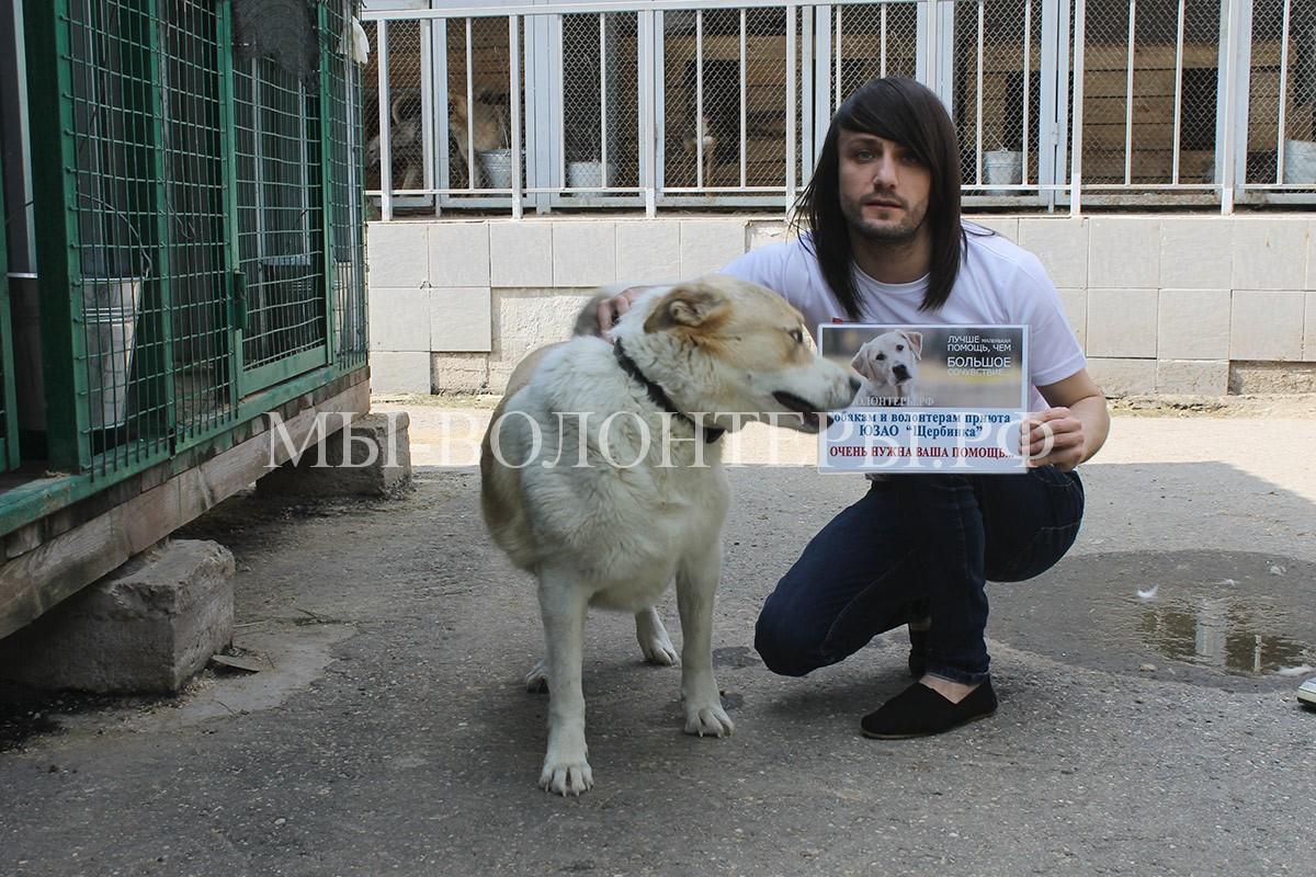 2-звезды-леван-тодуа-и-собака-приюта-щербинка-афина