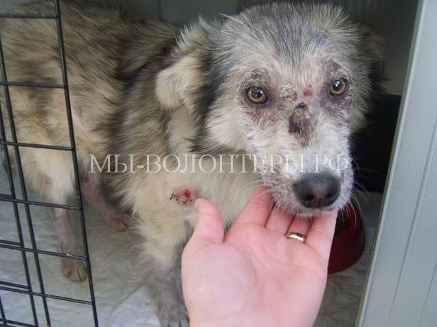 Девушка спасла собаку и забрала ее домой2