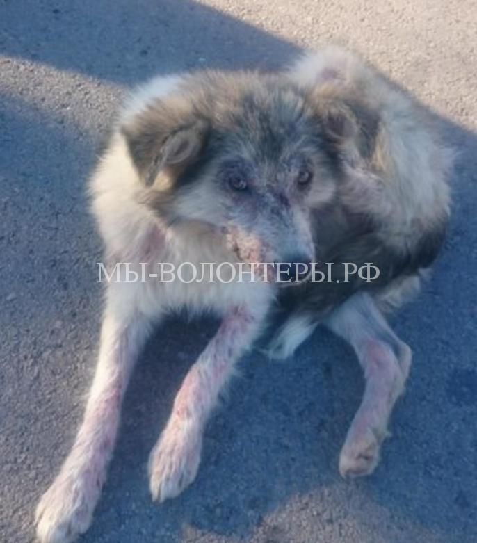 Девушка спасла собаку и забрала ее домой3