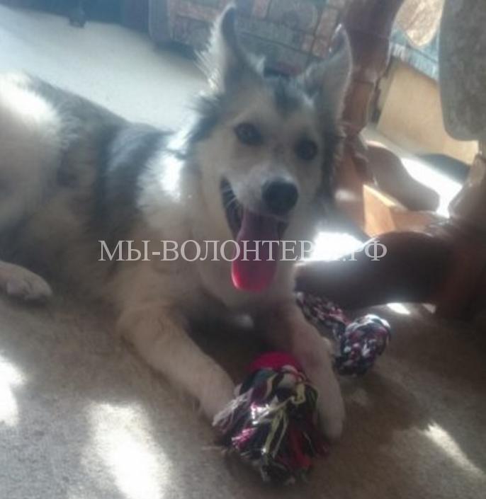 Девушка спасла собаку и забрала ее домой6
