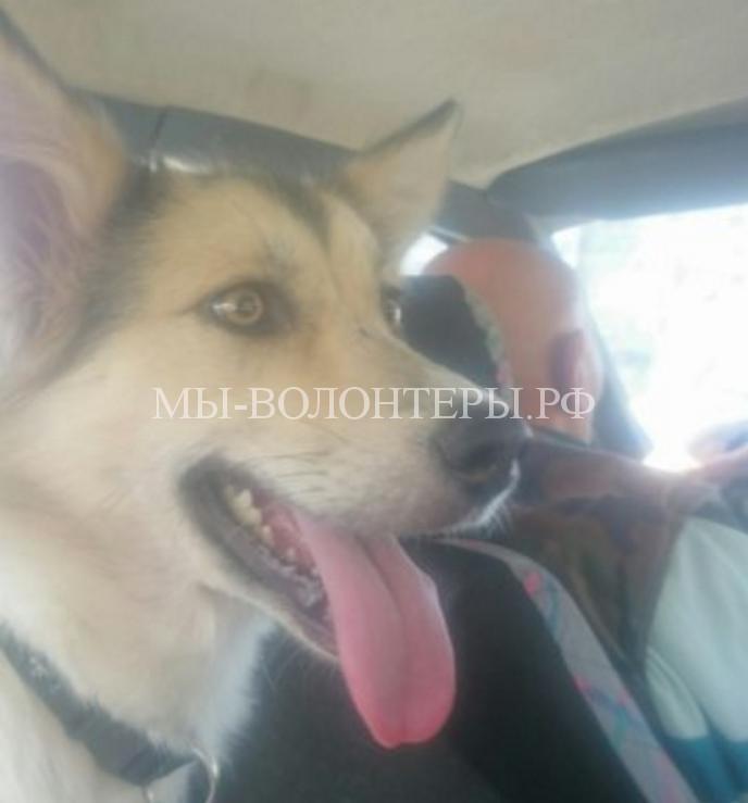 Девушка спасла собаку и забрала ее домой7