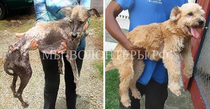 Помочь бездомному животному может каждый человек, для этого достаточно просто не пройти мимо