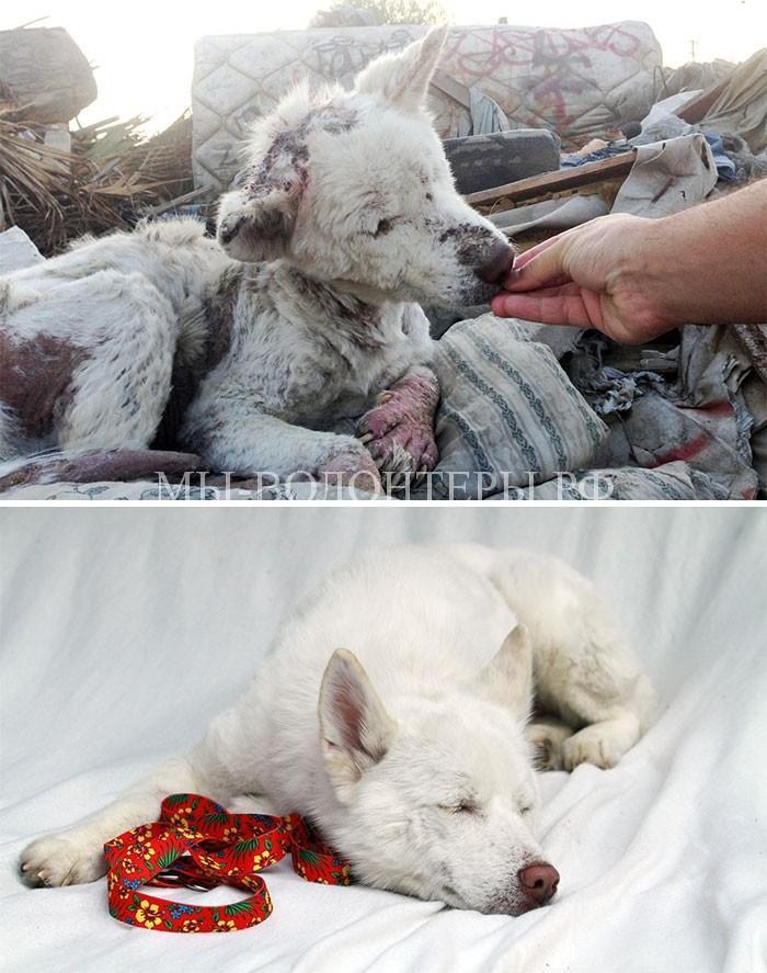 Истории спасения бездомных животных3
