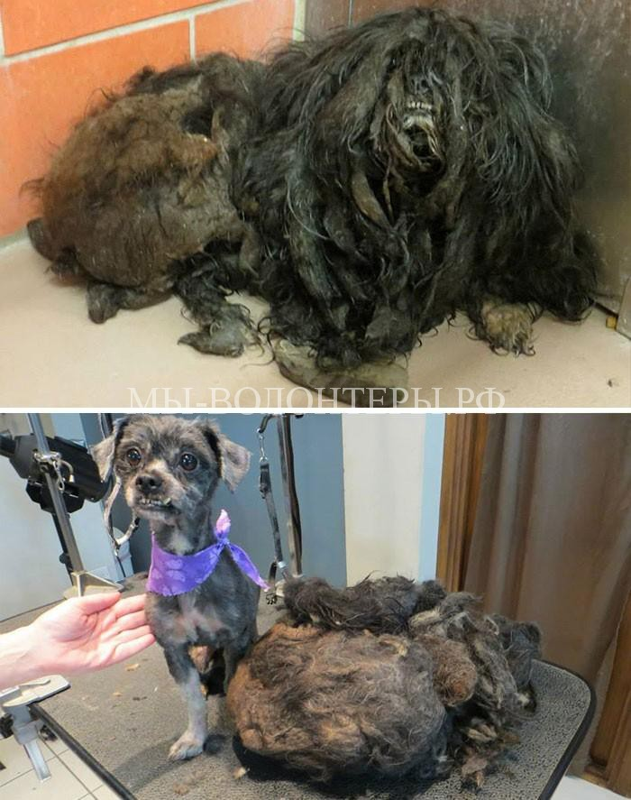 Истории спасения бездомных животных5
