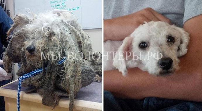 Истории спасения бездомных животных8