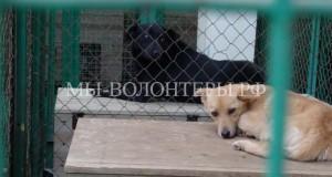 «Минская усыпалка» - пункт временного содержания бездомных животных в Белоруссии