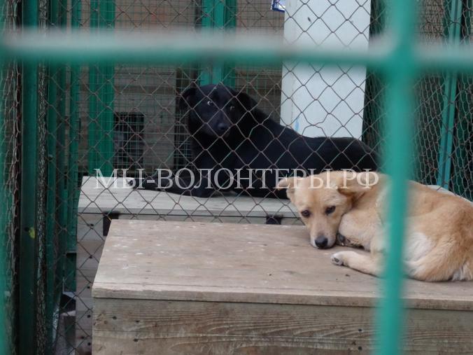 «Минская усыпалка» — пункт временного содержания бездомных животных в Белоруссии