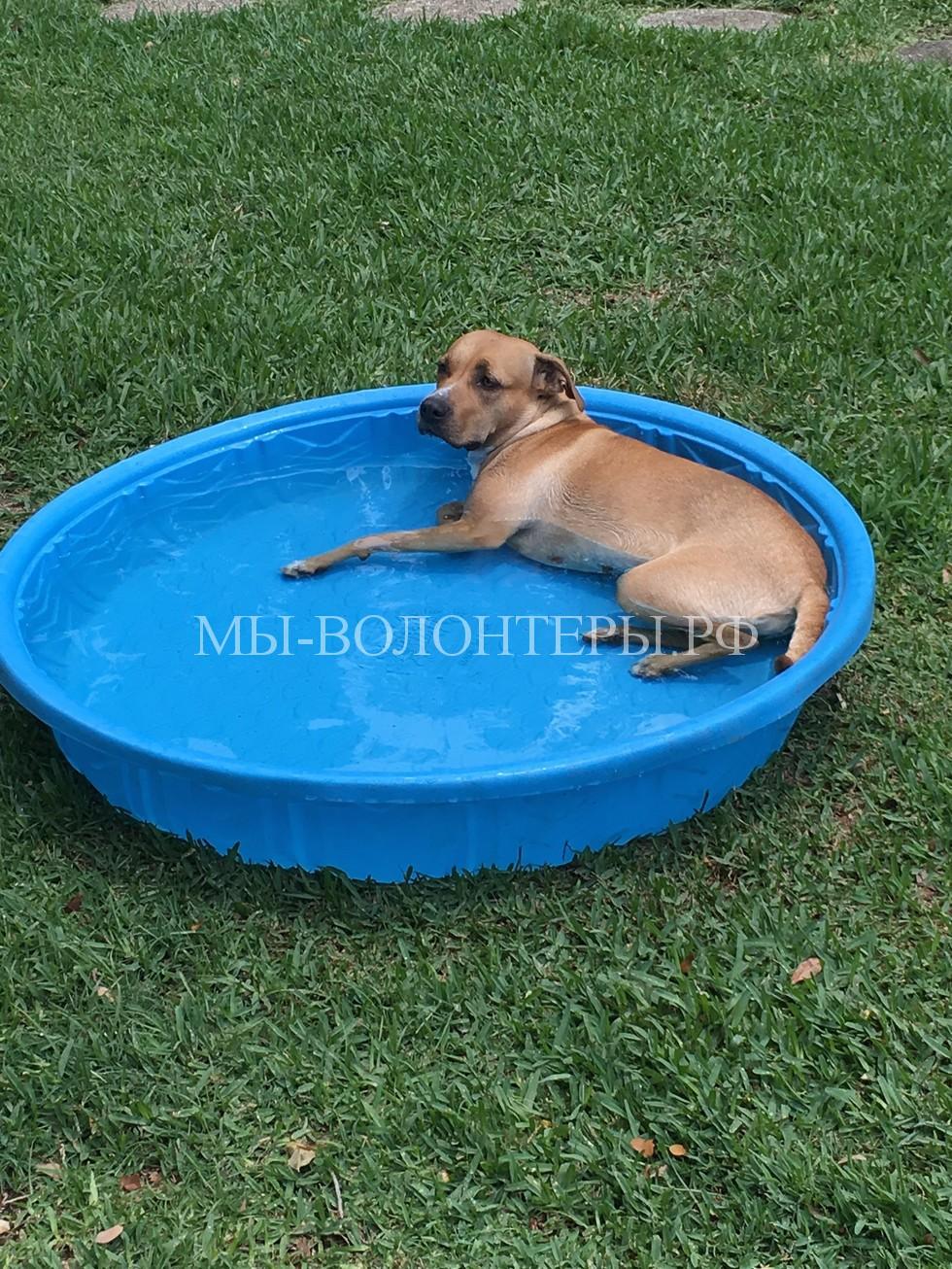 Спасение бездомной беременной собаки11