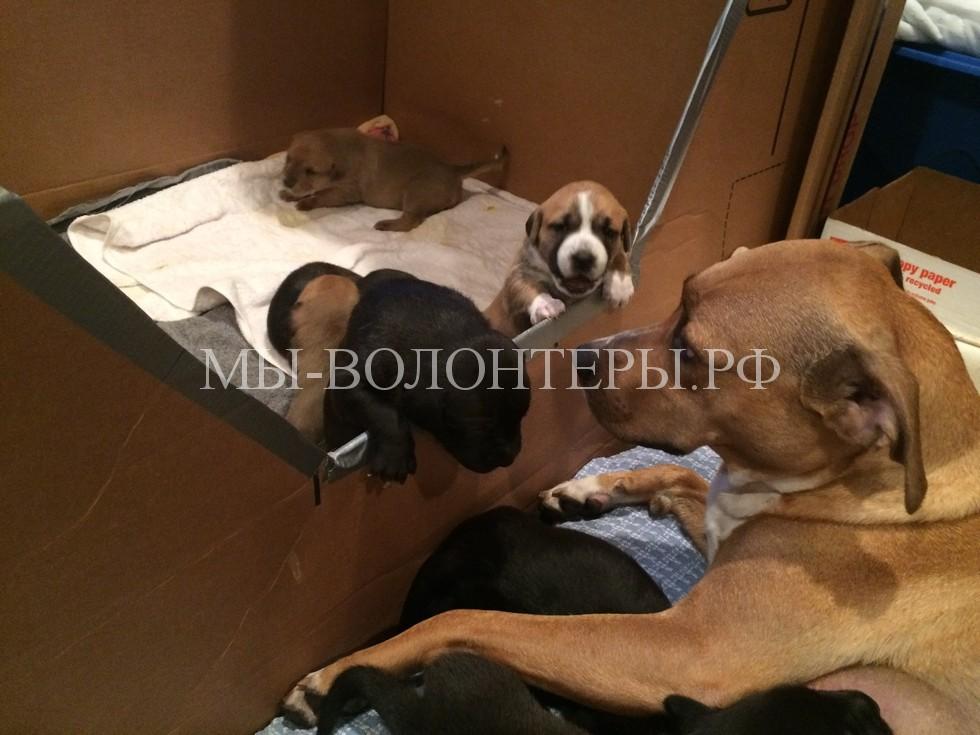 Спасение бездомной беременной собаки7