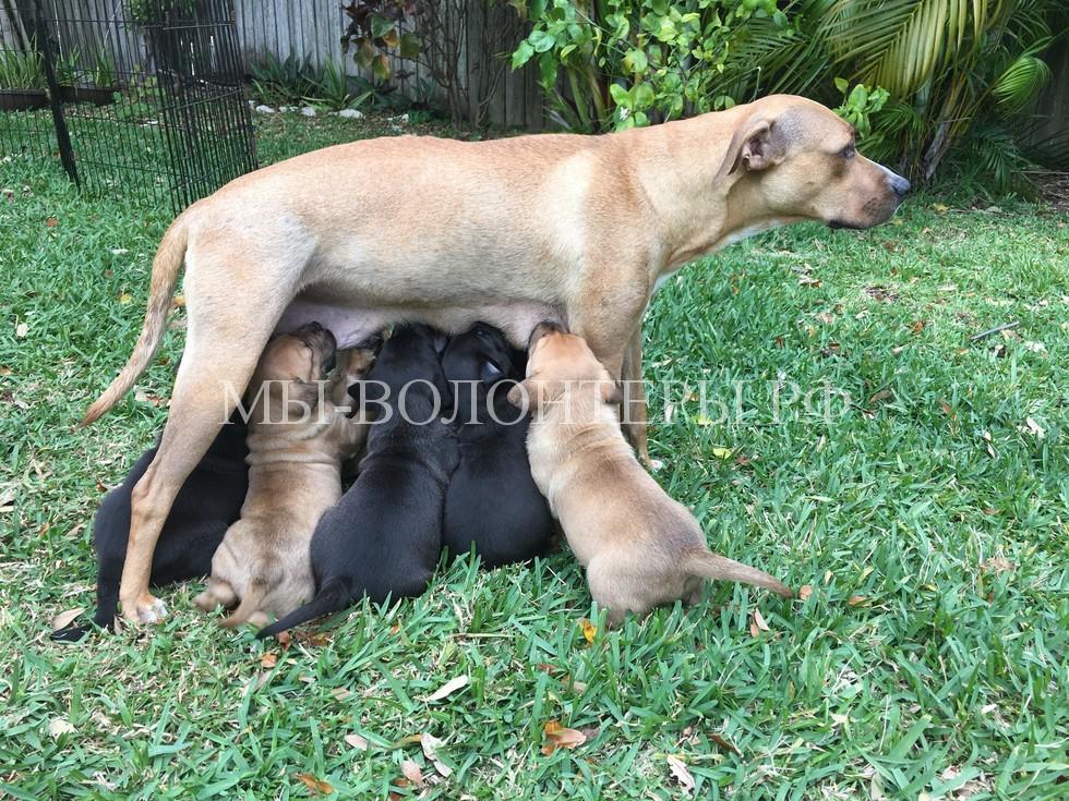 Спасение бездомной беременной собаки8