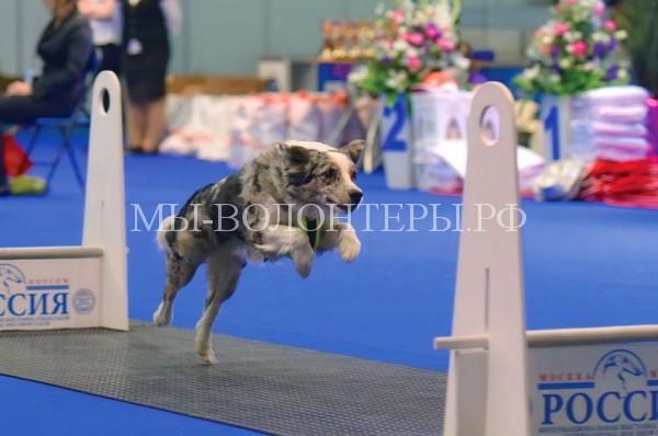 Акция за гуманное отношение к собакам пройдет в рамках Всемирной выставки собак