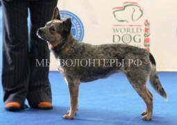 Собаки из приютов для бездомных животных участвовали на World Dog Show 2106