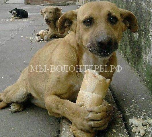 Закон об ответственном обращении с животными могут принять до конца года