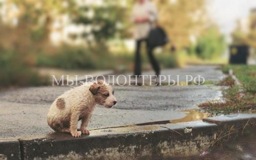 Условия по содержанию и защите от жестокого обращения животных законодательно урегулированы в Крыму