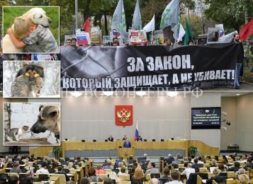 15 июня в Госдуме рассмотрение Закона об ответственном обращении с животными во 2-м чтении