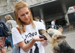 3 июля - Выставка бездомных животных «Надо брать! Летом!»