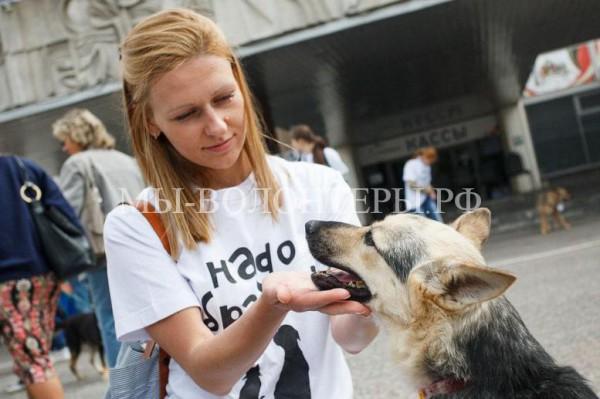 3 июля — Выставка бездомных животных «Надо брать! Летом!»