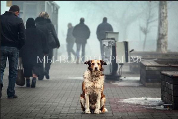 Депутат Госдумы О.Михеев предлагает учредить в России пост омбудсмена по защите животных