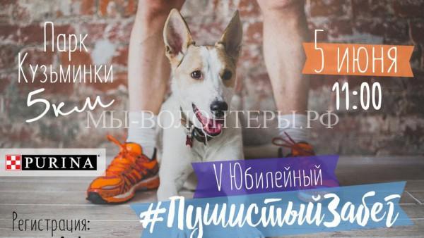5 июня «Пушистый забег» в Кузьминках