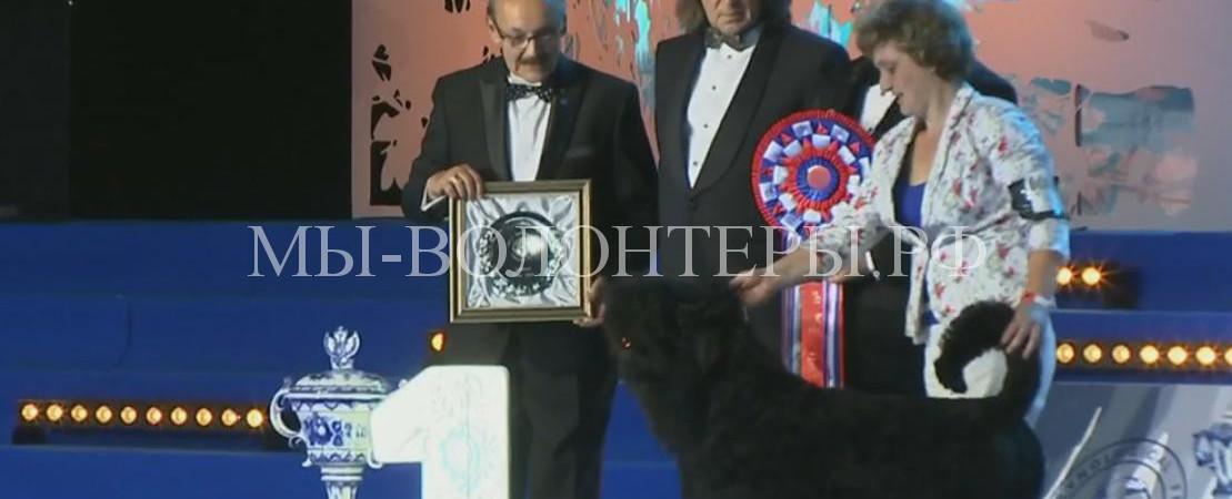 Русский черный терьер  — чемпион выставки World Dog Show -2016, Москва