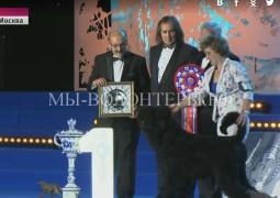 Русский черный терьер  - чемпион выставки World Dog Show -2016, Москва