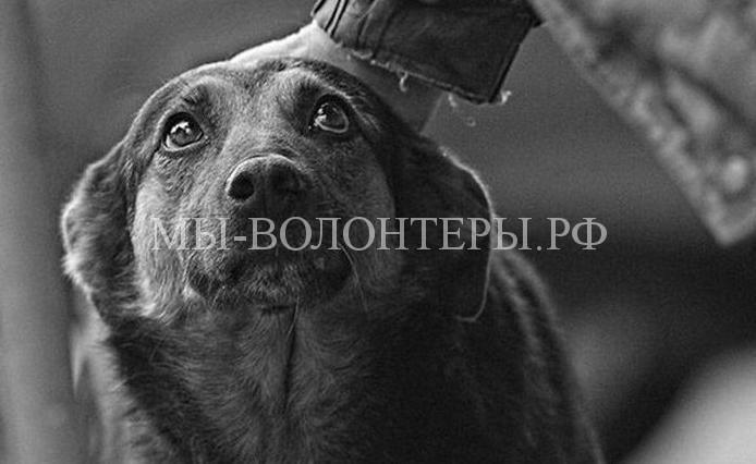 Про собаку с грустными глазами…