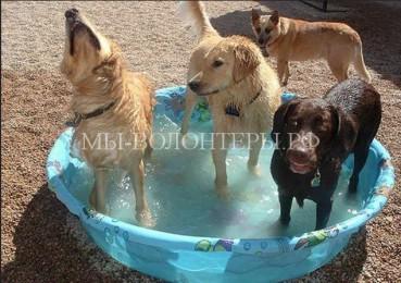 Как в жару облегчить жизнь собакам