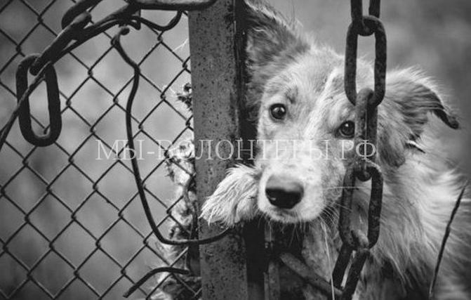 Пронзительные стихотворения Роберта Рождественского о собаках и несправедливости