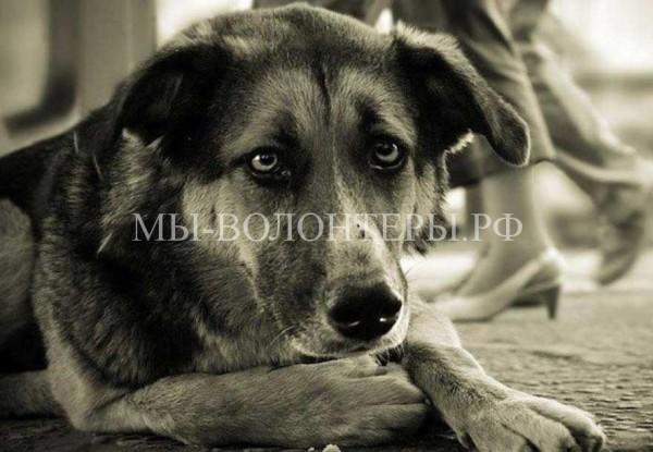 Депутат Госдумы О. Лебедев предложил увеличить штраф за жестокое обращение с животными