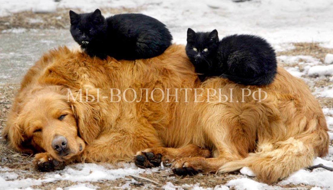 2-кошки-на-собаке