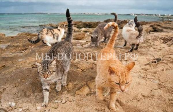 Кошачий приют на Сардинии в десятке лучших туристических мест острова