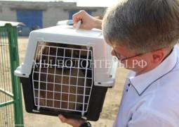 Глава администрации Рязани посетил приют для бездомных животных и взял себе щенка