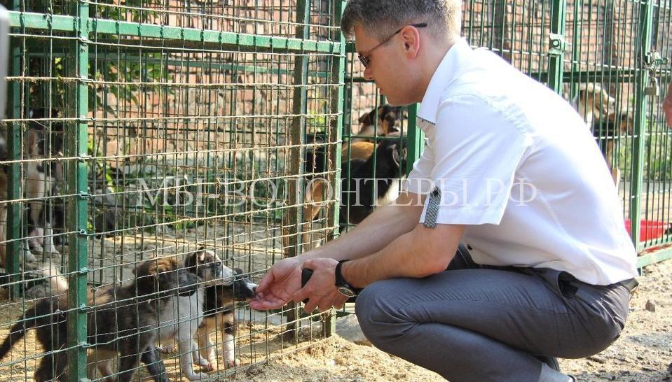 Мэр Рязани взял щенка из приюта2