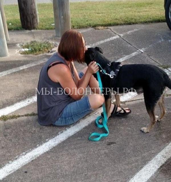 Несчастный пёс Анубис с отрезанным носом обрел семью