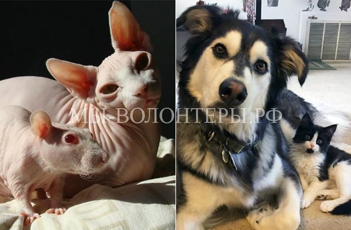 Похожие животные разных видов