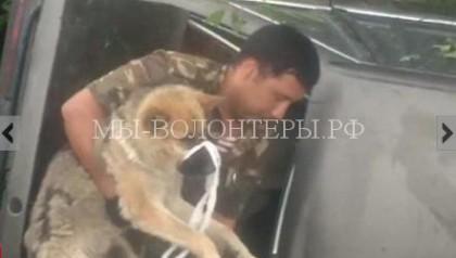 Раненую и брошенную хозяином после ДТП собаку определили «служить» в полицию