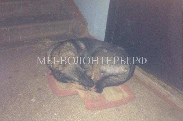 Собаку выгнали хозяева и она живет под дверью2