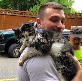 Спасение кошки, застрявшей в решетке канализационного стока