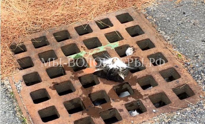 Спасение кошки из решетки люка2