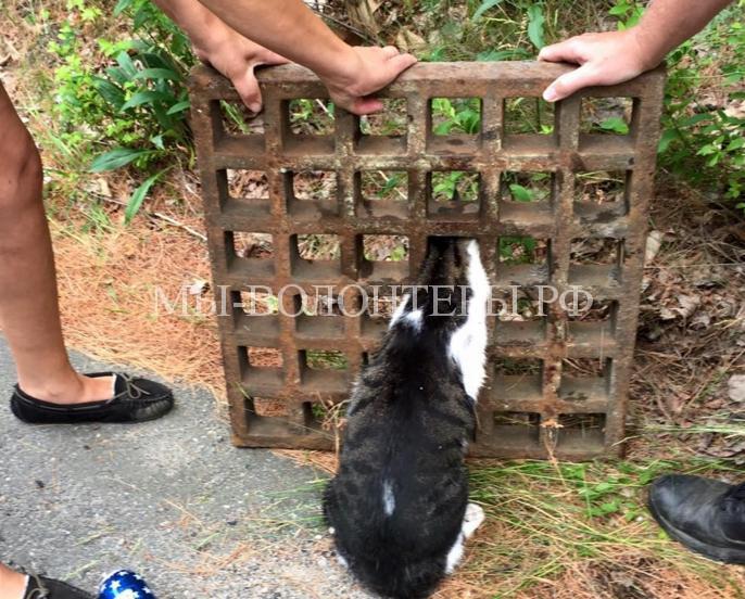 Спасение кошки из решетки люка3