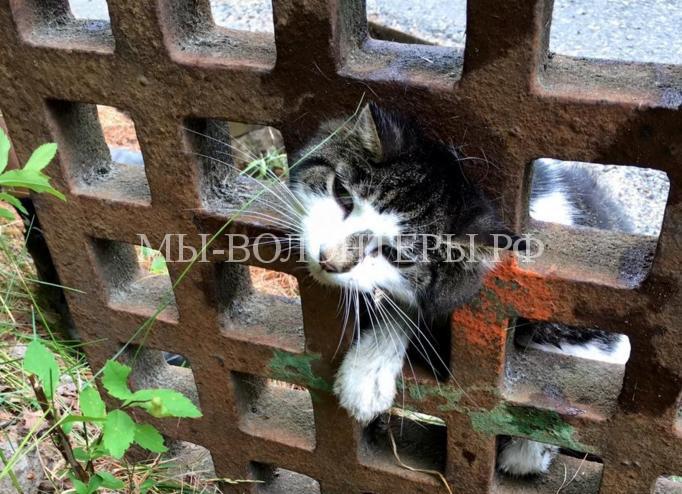 Спасение кошки из решетки люка4