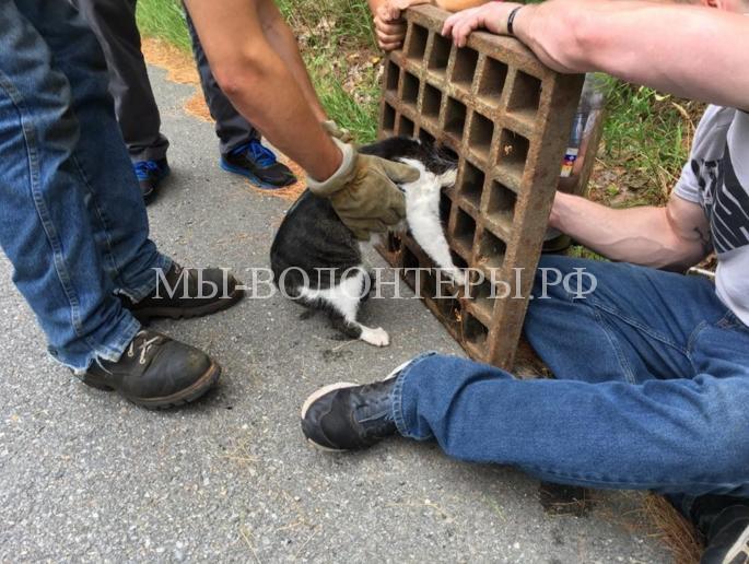 Спасение кошки из решетки люка5