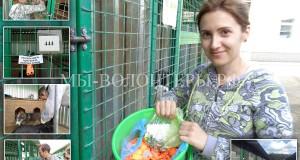 Спасибо Юле Носковой и Алексею Блувштейну за бирки с телефонами для собак приюта