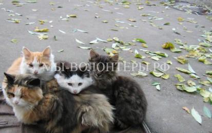 Электронная база потерявшихся и бродячих кошек появится в Москве