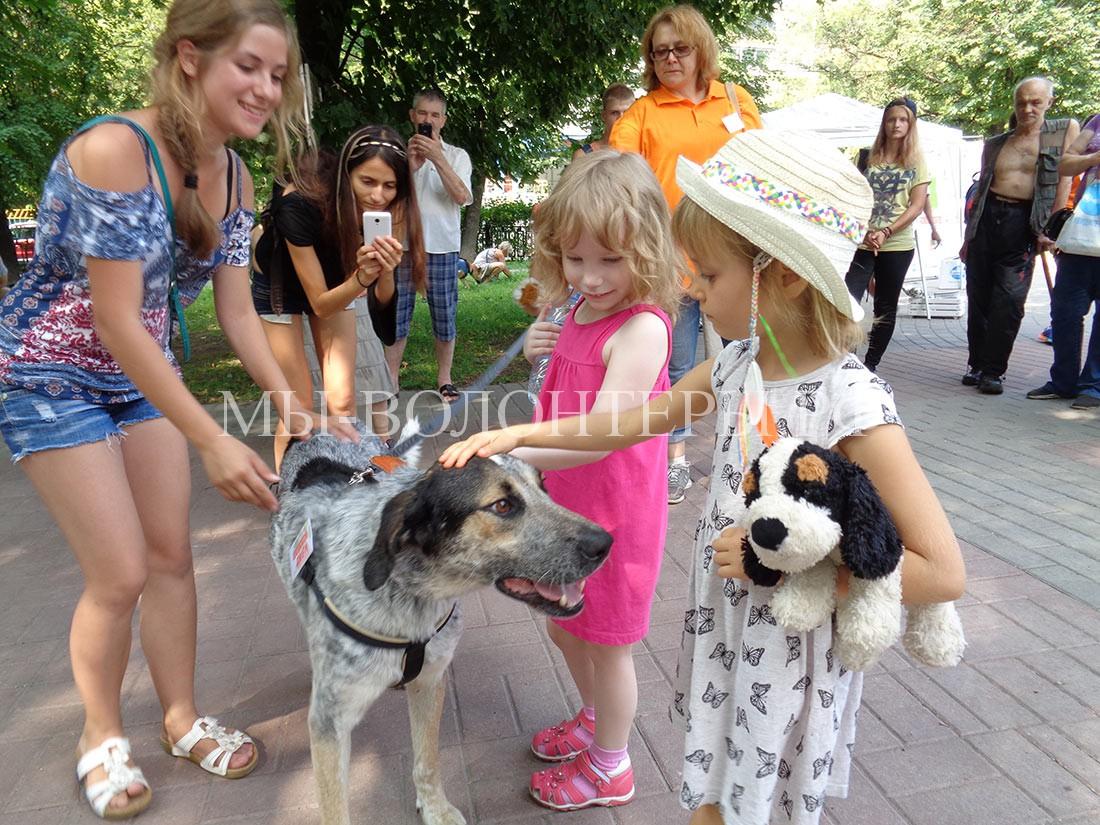 выставка-дорога-домой-дефиле-собак-приюта-кожухово-дети